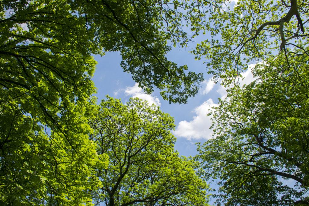 kerrys-tree-thousand-oaks